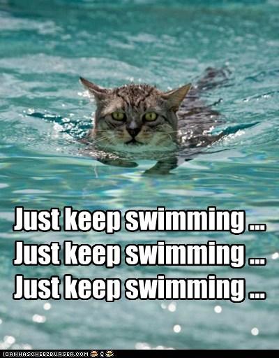 Just keep swimming ... Just keep swimming ... Just keep swimming ...
