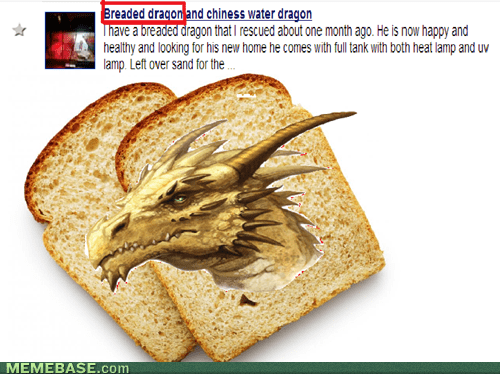 Breaded dragon?