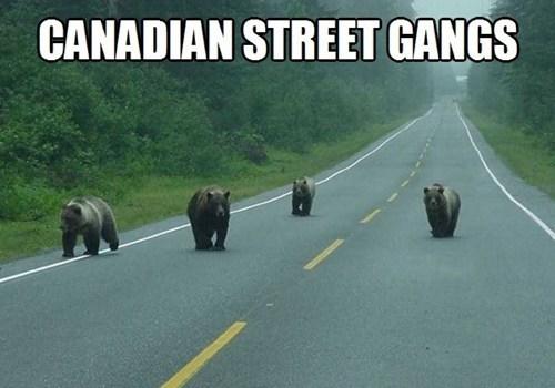 Grizzly Looking Fellas, Eh?