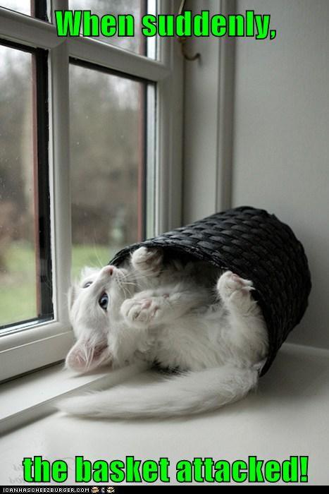 kitten,Cats,basket,window