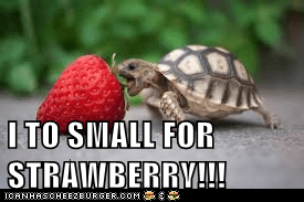 I TO SMALL FOR STRAWBERRY!!!