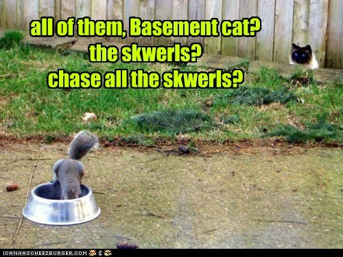 all of them, Basement cat? the skwerls? chase all the skwerls?