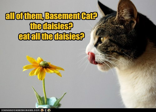 all of them, Basement Cat? the daisies? eat all the daisies?