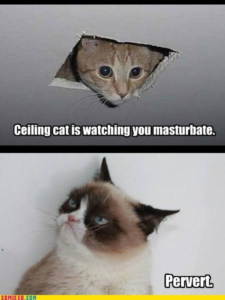 Pervy Cat