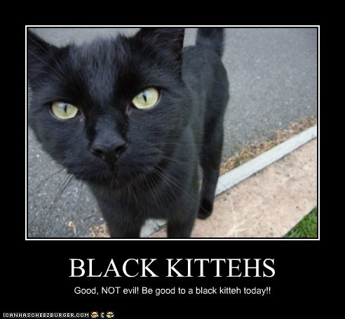 BLACK KITTEHS