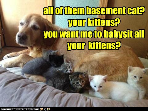 all of them basement cat? your kittens? you want me to babysit all your  kittens?