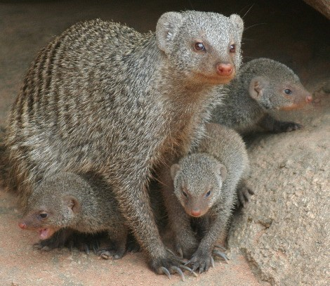 Babies,mongoose,mama,squee spree,squee