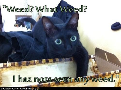 """Weed? What Weed?  I haz nots seen any weed."""