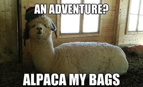 alpaca,pack,bags,similar sounding,adventure