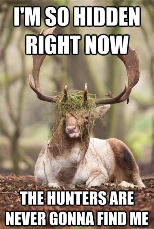 This Deer is a Geenyus!