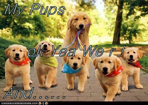 My Pups  ok Yea We r ! And......