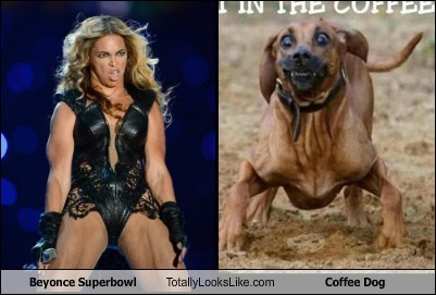 Beyonce Superbowl Totally Looks Like Coffee Dog