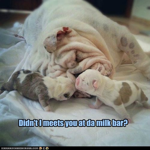 Didn't I meets you at da milk bar?