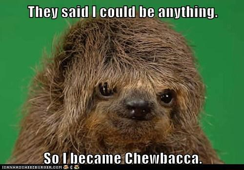 they said i could be anything,chewbacca,sloth