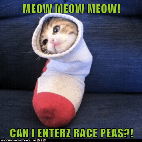 MEOW MEOW MEOW!  CAN I ENTERZ RACE PEAS?!