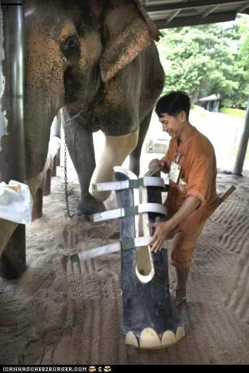 Asian Elephant receives Prosthetic leg after loosing leg to landmine