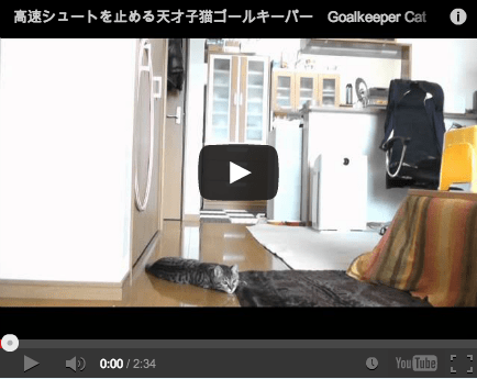 Around the Interwebz: Goalie Cat Will Never Let You Score!