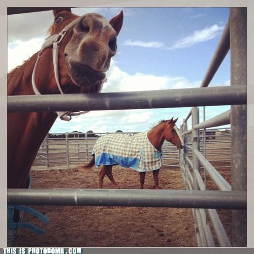 animals,horse