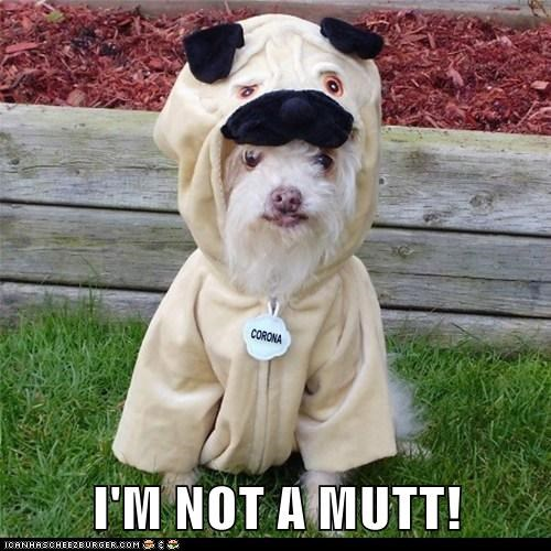 I'M NOT A MUTT! Funny Dog In Pug Costume