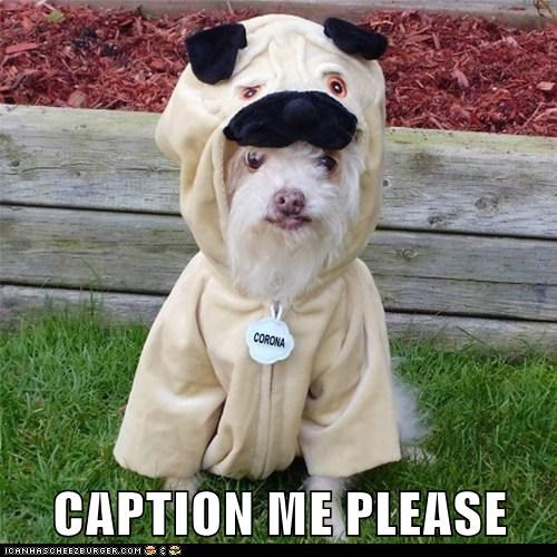 CAPTION ME PLEASE! Funny Dog In Pug Costume
