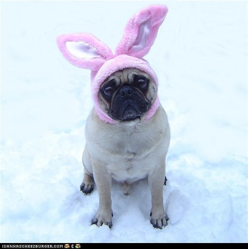 Funny Pug Dog Easter Bunny PLEASE CAPTION ME!