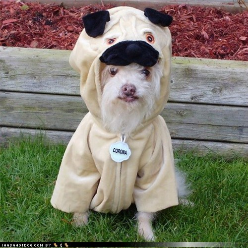Funny Dog In Pug Costume