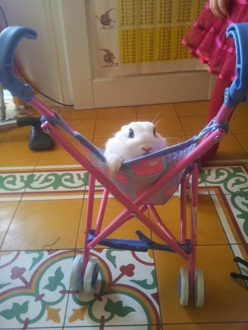 stroller,bunny