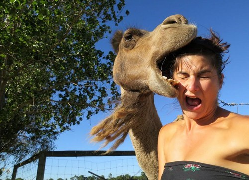Camel Portrait FAIL
