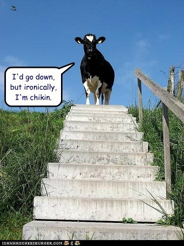 I'd go down, but ironically, I'm chikin.