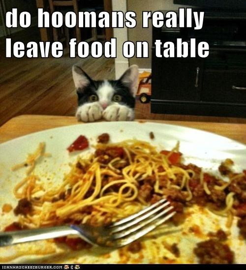 do hoomans really leave food on table