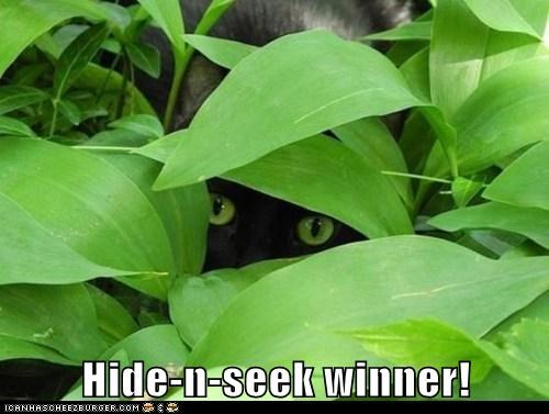 Hide-n-seek winner!