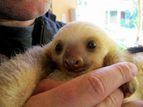 Nothing Like a Sloth to Brighten Your Day