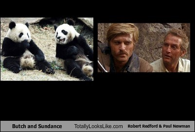 Butch and Sundance Totally Looks Like Robert Redford & Paul Newman