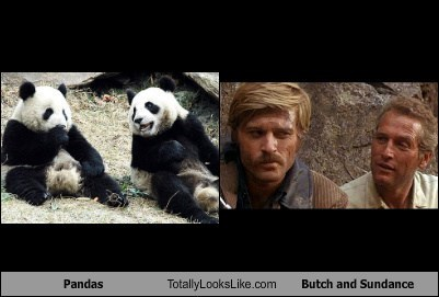 Pandas Totally Looks Like Butch and Sundance