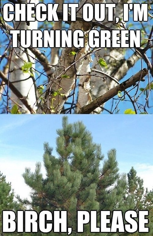 spring,birch,beezy please
