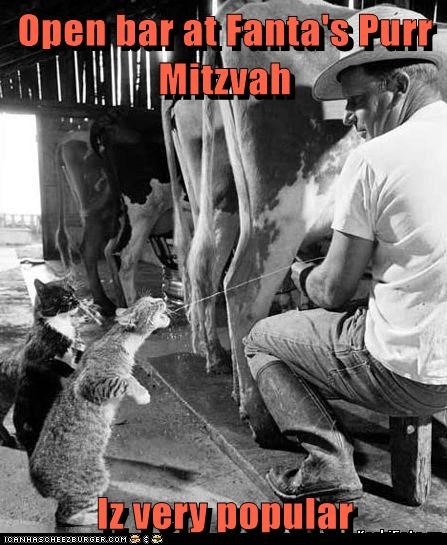 Open bar at Fanta's Purr Mitzvah  Iz very popular