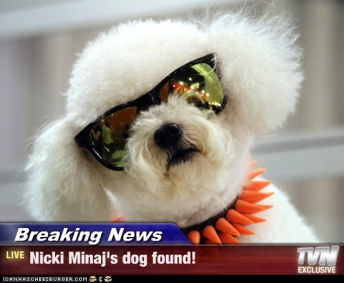 Breaking News - Nicki Minaj's dog found!