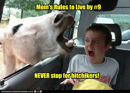 rules to live by,hitchhikers,donkeys