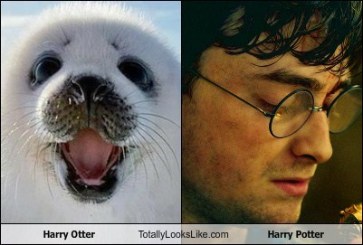 Harry Otter Totally Looks Like Harry Potter