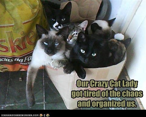 Our Crazy Cat Lady got tired of the chaos and organized us.