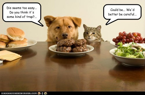 table,trap,food