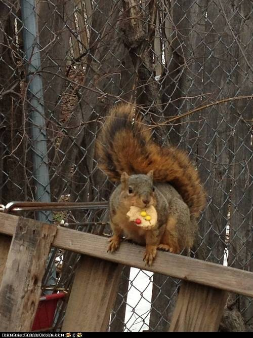 Squirrel With Cookie