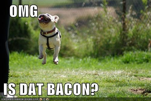 dogs,cute,happy,bacon