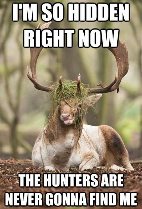 ninja,deer