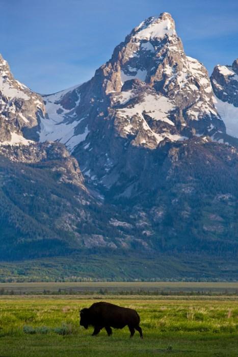 On the Teton Range