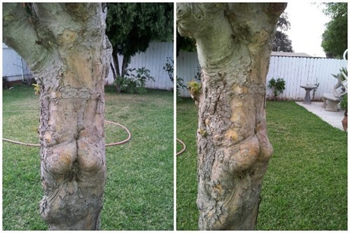 This Tree Must Have a Killer Workout Routine