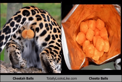 Cheetah Balls Totally Looks Like Cheeto Balls
