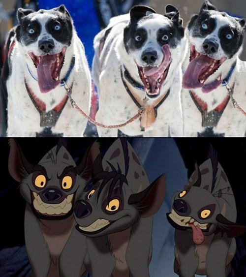 look alikes,hyena,lion king