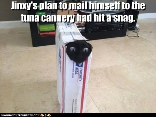 Jinxy's plan to mail himself to the tuna cannery had hit a snag.