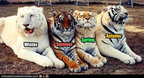 """The Four Seasons of Tiger"""